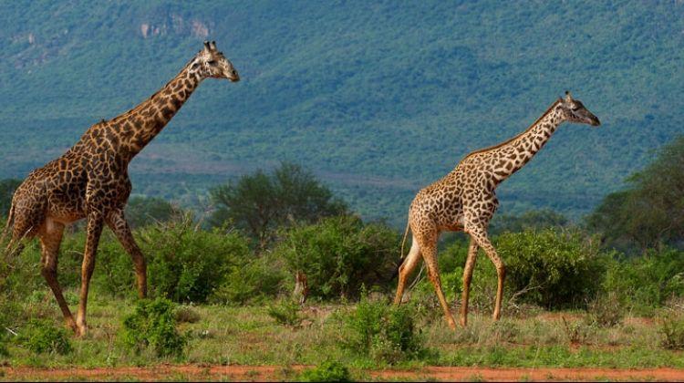 Best of Kenya Safari and beach vacation