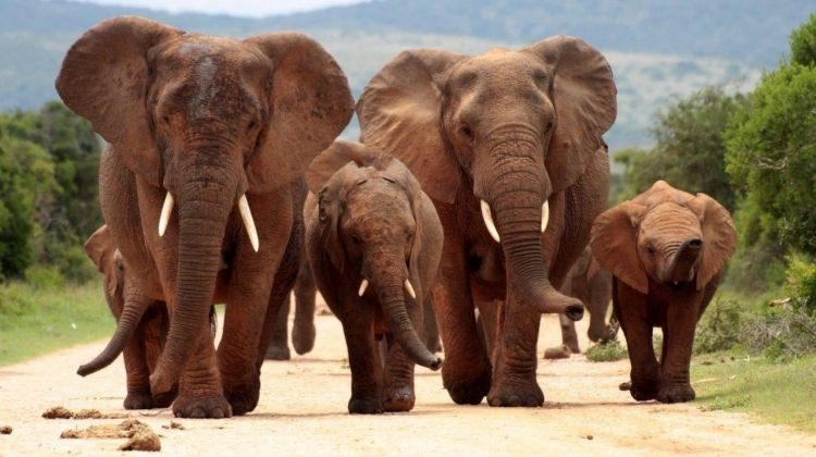 Best Of Kruger National Park, Spanish-speaking Guide, Private Tour