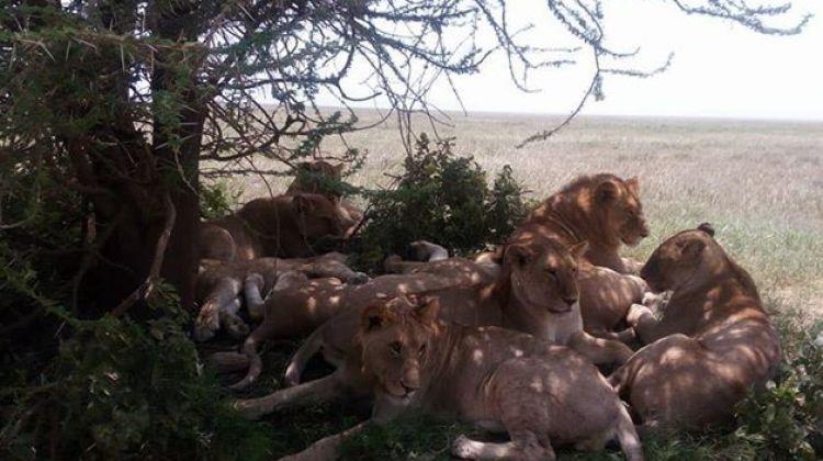 Best of Tanzania High-End, Luxury Safari Tour