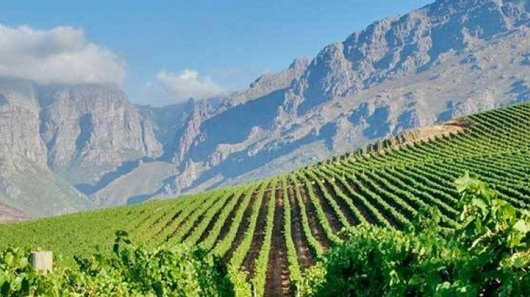 Best of the Cape Winelands - Stellenbosch