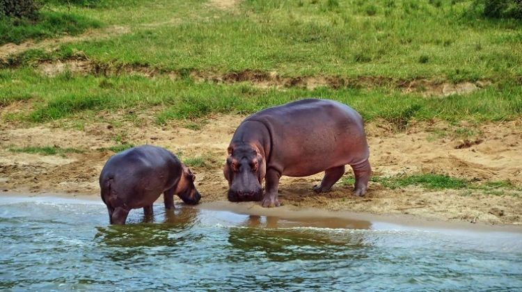 Best of Uganda's Wildlife