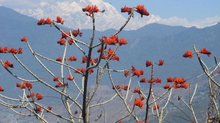 Beyond Pokhara: A Hills and Lakes Adventure