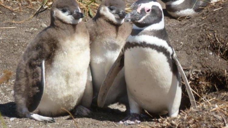 Boat Trip to Penguin Colony from Ushuaia