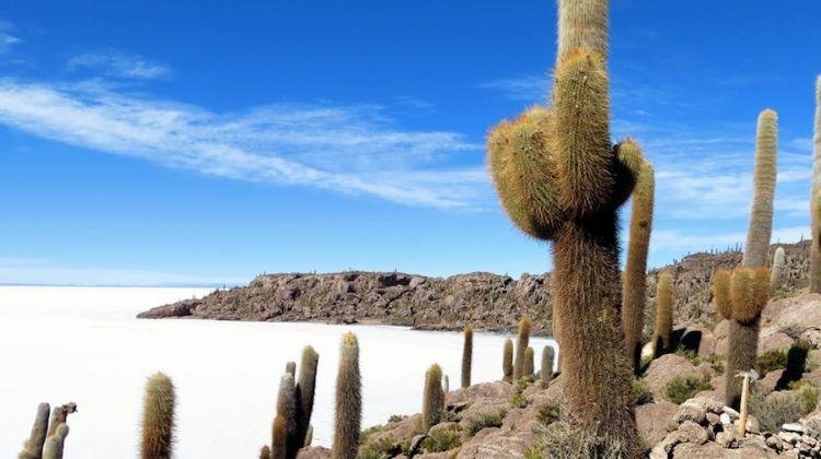 Bolivia Expedition