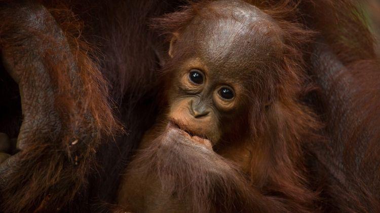 Borneo Wildlife Discoverer