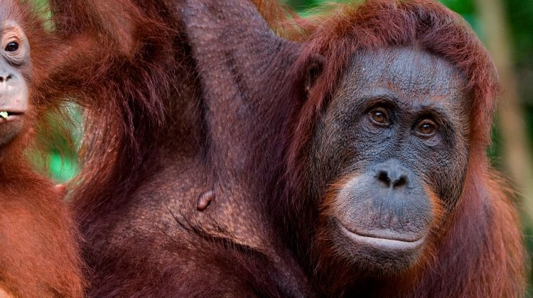Borneo Wildlife Family Holiday