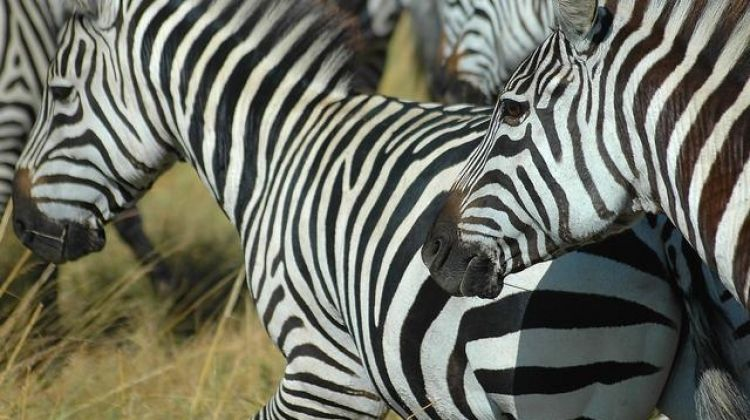 Botswana and Falls Overland: Wildlife Walks & Safari Drives