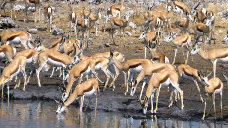 Botswana Delta and Wildlife in Comfort