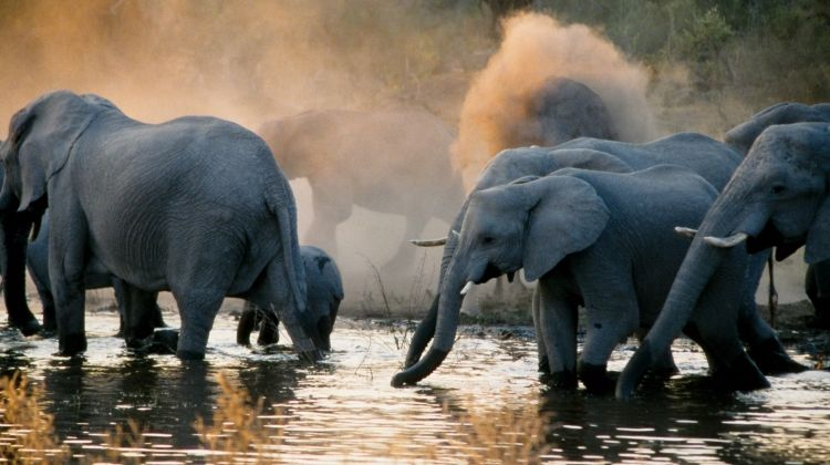 Botswana Highlights