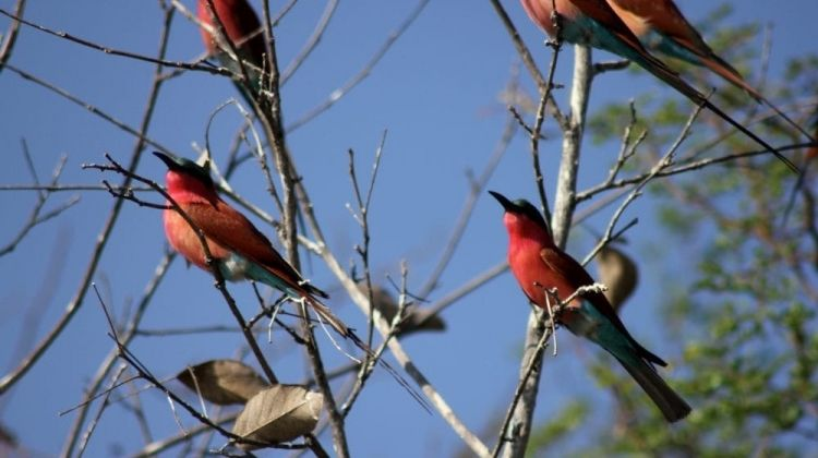 Botswana Wildlife Safari