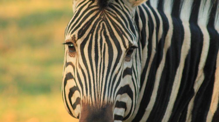 Botswana's Premium Safari