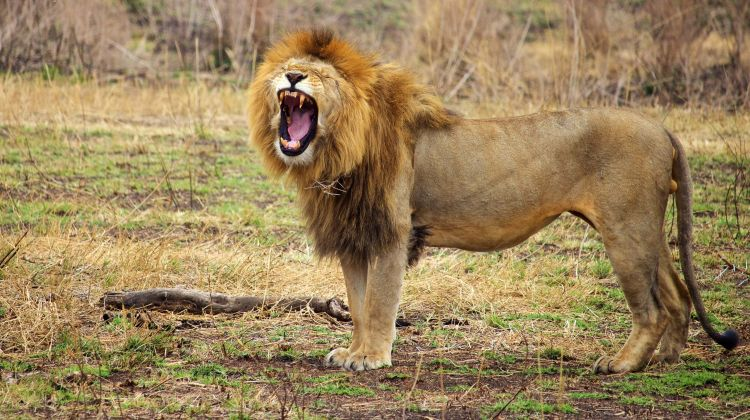 Budget Camping Safari: Tarangire & Ngorongoro