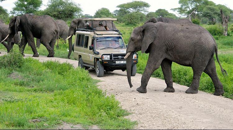 Budget Safari in Tarangire and Ngorongoro: Two Days