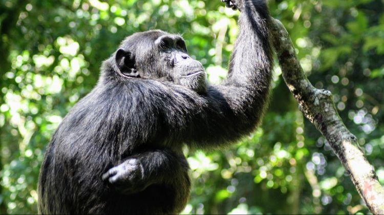 Bwindi Gorilla Safari: 3 Days
