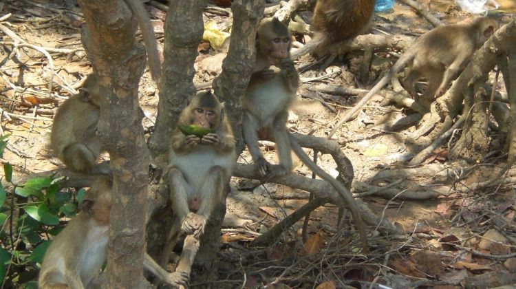 Can Gio Ecologic Area Excurions (Monkey Island) full day
