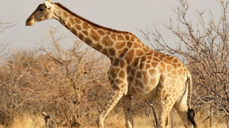Cape Desert Safari (South)