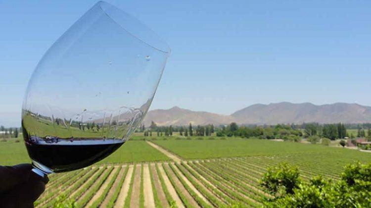 Casablanca Valley Wine Tasting Day - 4 Vineyard