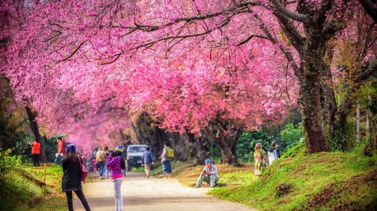 Chiang Mai City Package