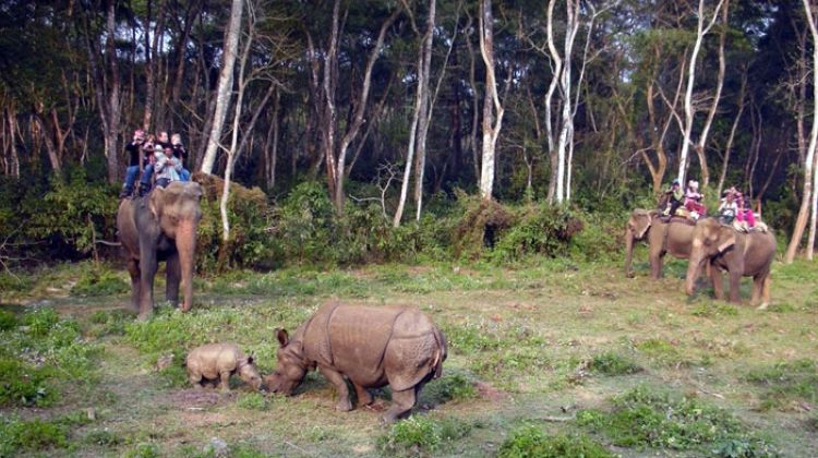 Chitwan Jungle Safari - 2 Nights and 3 Days