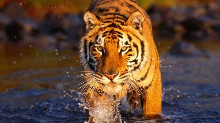 Chitwan Jungle Safari - 2 Nights and 3 Days