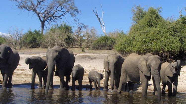 Classic Bush Safari Adventure in Tanzania