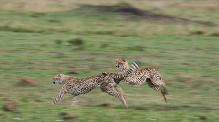 Classic Kenya 4WD Safari