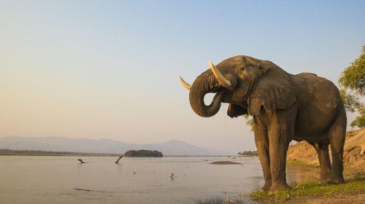 Classic Zambia Safari & Victoria Falls Tour