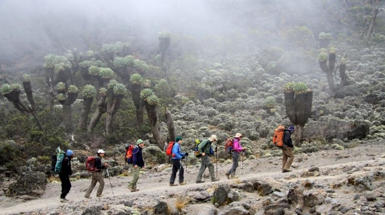 Climbing Kilimanjaro 6-day Marangu Route