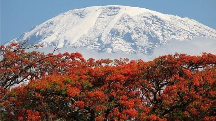 Climbing Kilimanjaro Mountain 6-Day Rongai Route