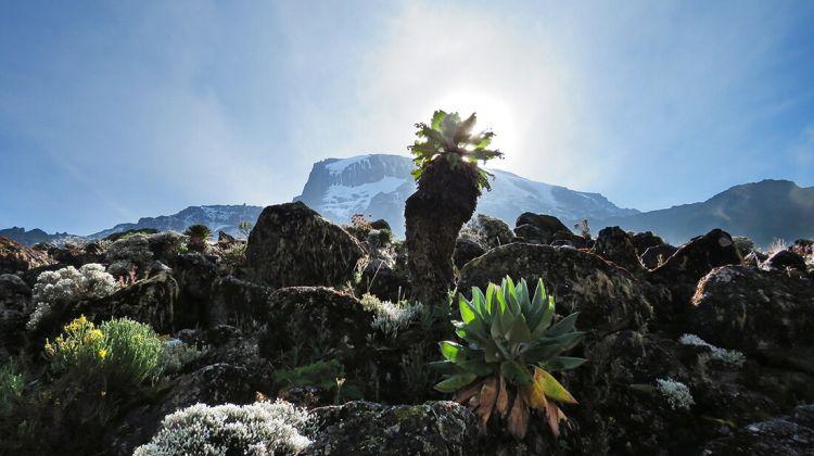 Climbing Mount Kilimanjaro 8-Day Lemosho Route