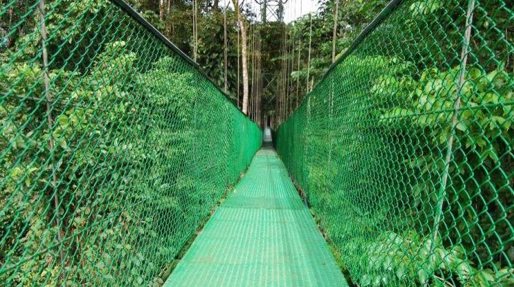 Cocoa Plantation and Rainforest Adventure