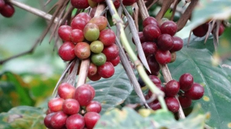 Coffee Grinding Tour - Starting from Arusha
