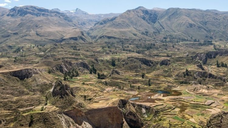 colca canyon trekking 3d 2n transfer to puno by bamba experience
