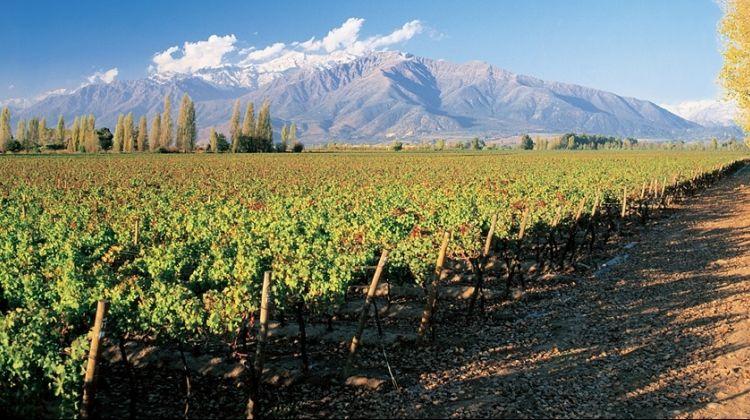 Concha y Toro Wine Experience