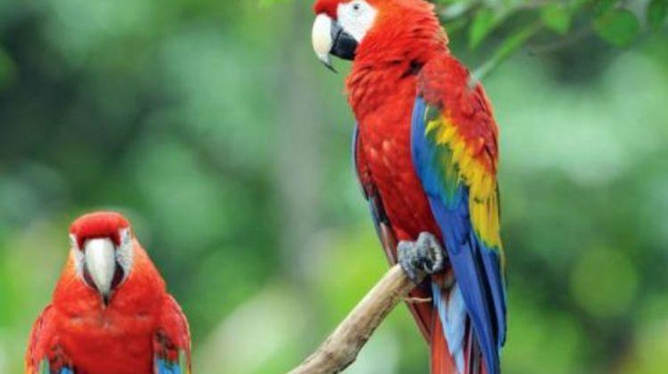 Costa Rica Experience