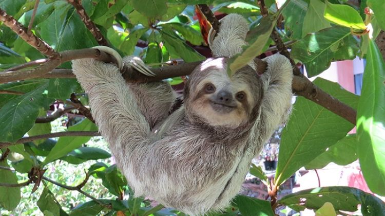 Costa Rica: Volcano, Forest & Beach