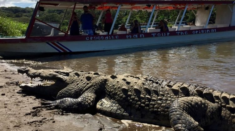Crocodile Man One Day Boat Tour