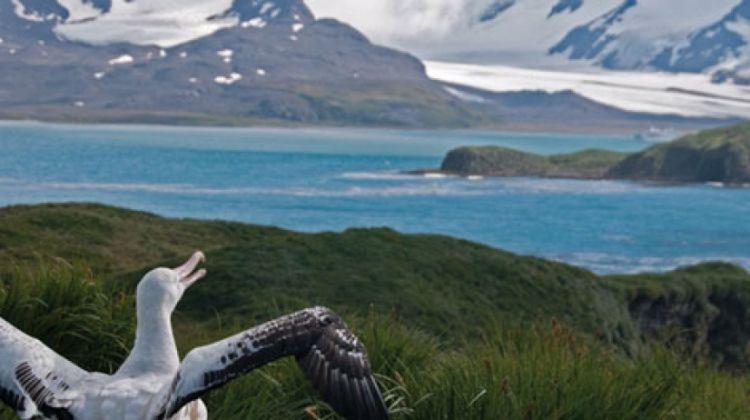 Crossing the Antarctic Circle via Falklands & South Georgia from Ushuaia