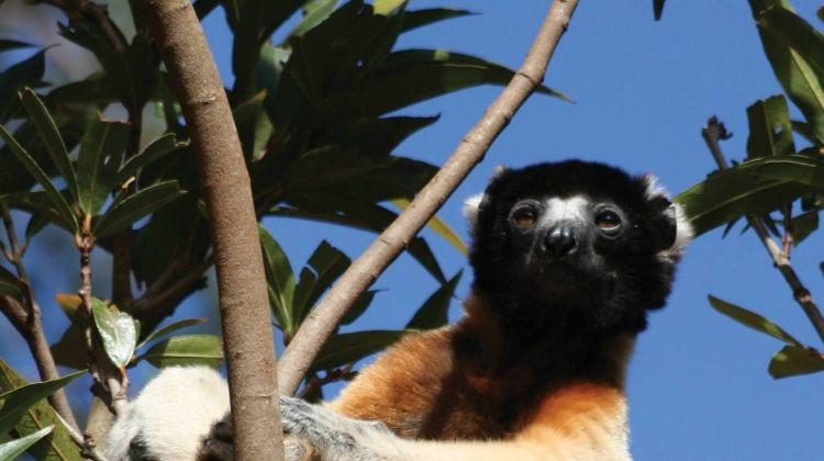 Culture & Wildlife of Madagascar