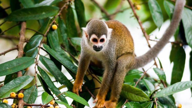 Cuyabeno Reserve Rainforest Tour - 5 days