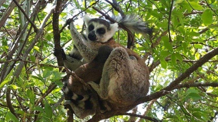 Cycle Madagascar