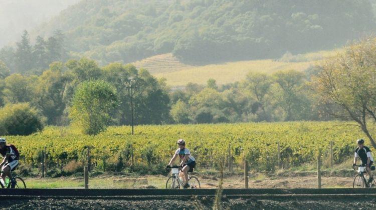 Cycle Sonoma & the Napa Valley