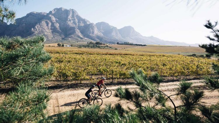 Cycling & Wine Tasting in the Winelands