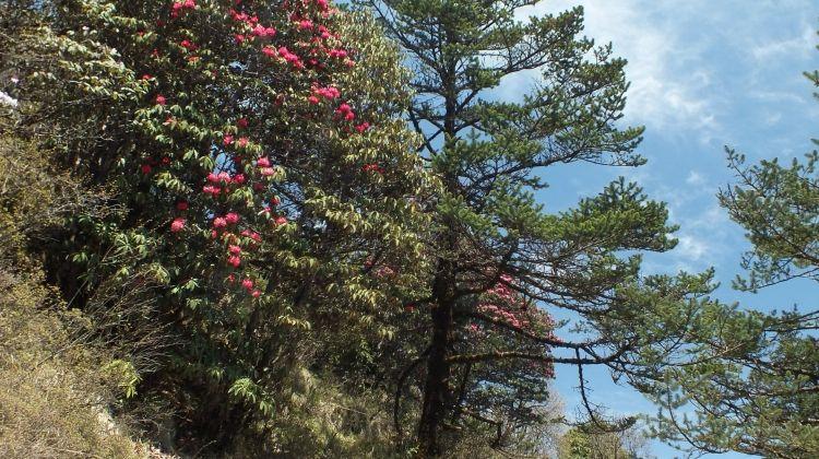 Darjeeling, Sikkim & the Singalila Ridge