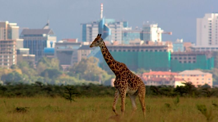 Day Tour - Nairobi National Park, Elephant & Giraffe Park