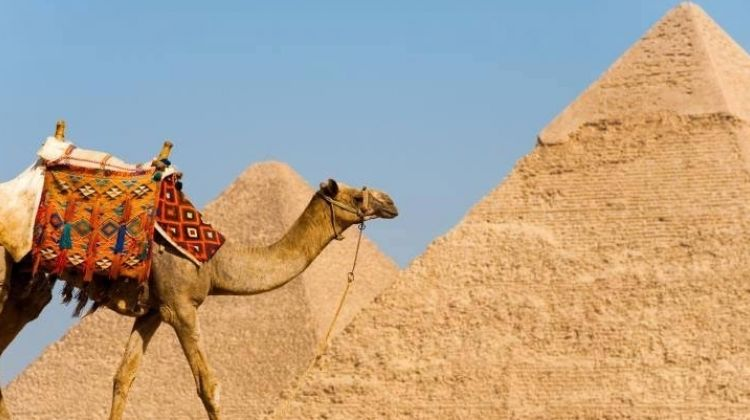 Day Tour to Giza Pyramids Old Cairo Citadel and Bazaar