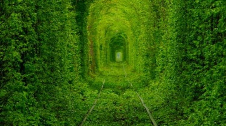 Day Trip to the Tunnel of Love from Kiev
