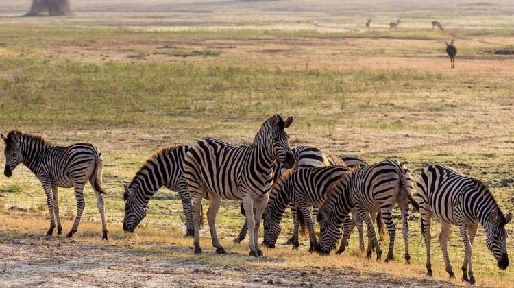 Desert Rivers and Wildlife in Comfort
