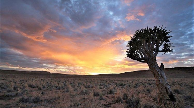 Desert Tracker 25 Days