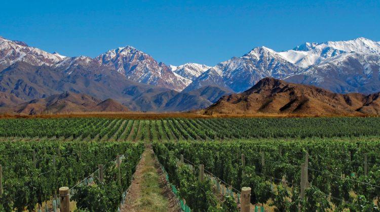 Deserts, Jungle and Wine